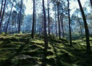 5 Short Treks Near Nainital You Never Knew About ! 4