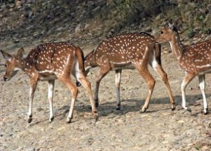 national parks and wildlife sanctuaries of uttarakhand