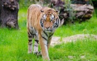 Be an Ecotourist and Travel Responsibly: A Tour of India's Wildlife Sanctuaries and National Parks 5