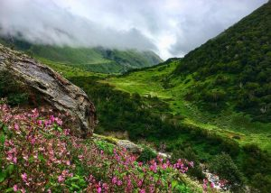 National Parks and Wildlife Sanctuaries in Uttarakhand 4