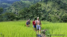 Exploring new trails sometimes requires rice field traverses