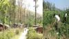forest-parsa