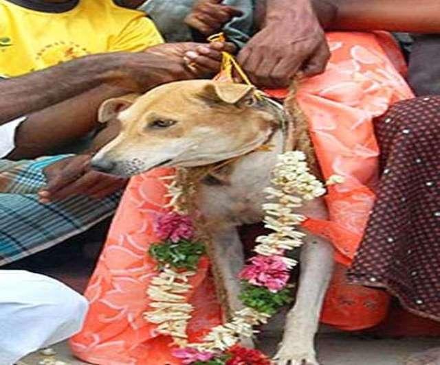 कुत्ता-कुतिया की शादी पूरे रीति-रिवाज से हुई। दूल्हे-दुल्हन की लगुन चढ़ी, भात दिया गया और बाराती व घरातियों के भोज की भी व्यवस्था की गई।