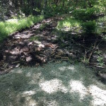 During-Wetland Reclamation