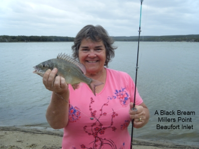 black-bream.jpg