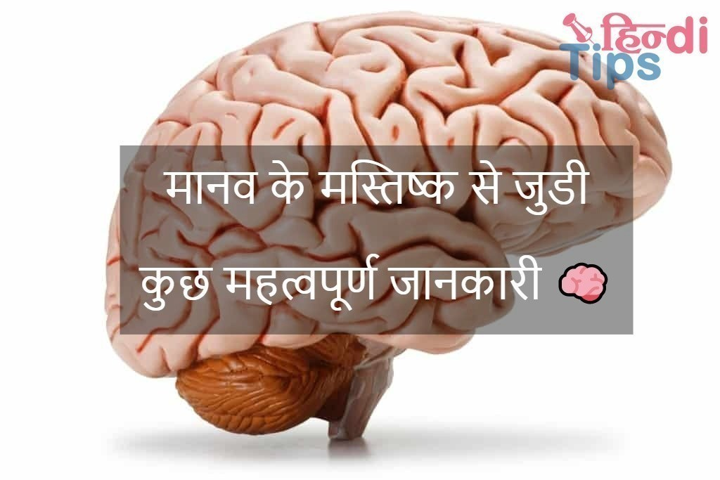 Important facts related to human brain