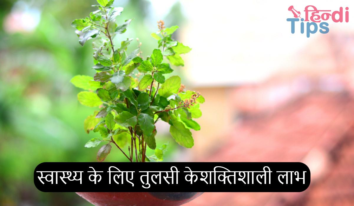 Powerful Benefits Of Tulsi For Health