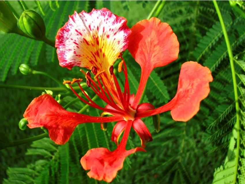 Name Of The Flowers In English And Hindi Kayaflower Co