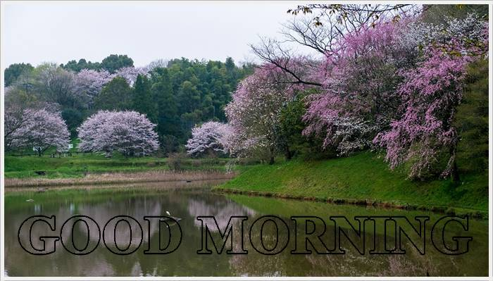 Good Morning Photo HD Wallpaper Pics PicDownload For Whatapp