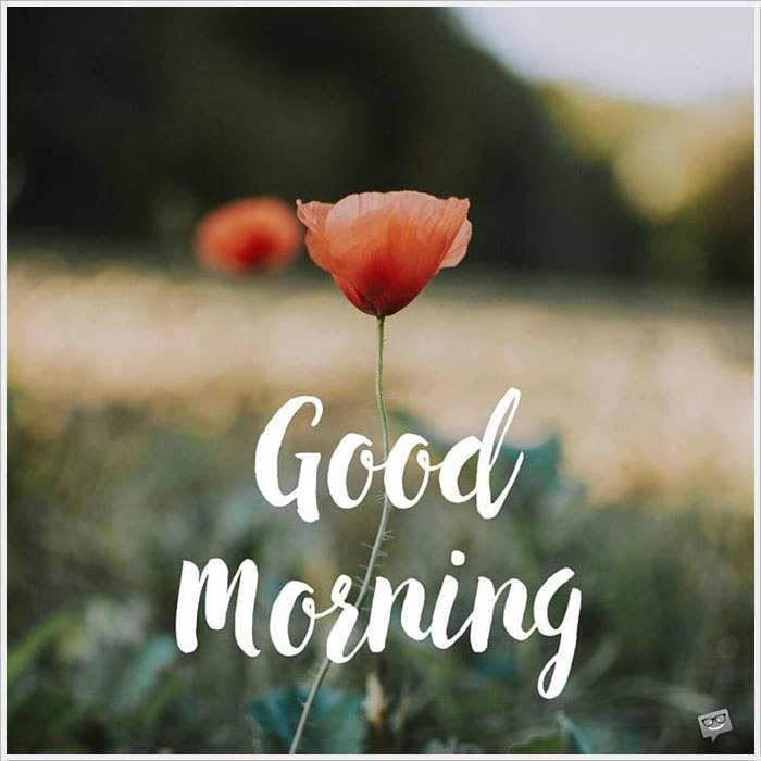 Good Morning Photo HD Images Pic Pictures Wallpaper Share