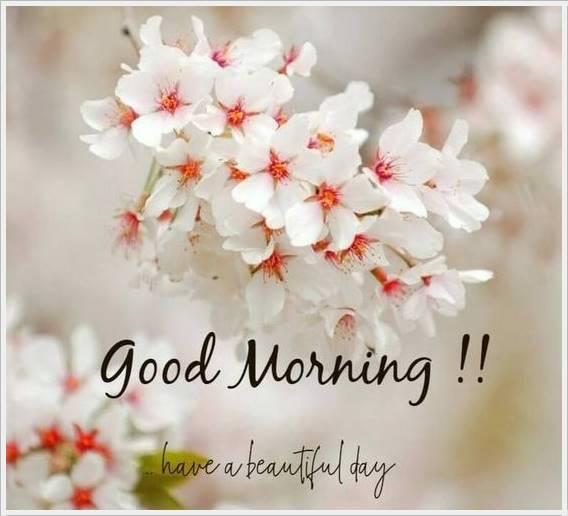 good morning photo hd47