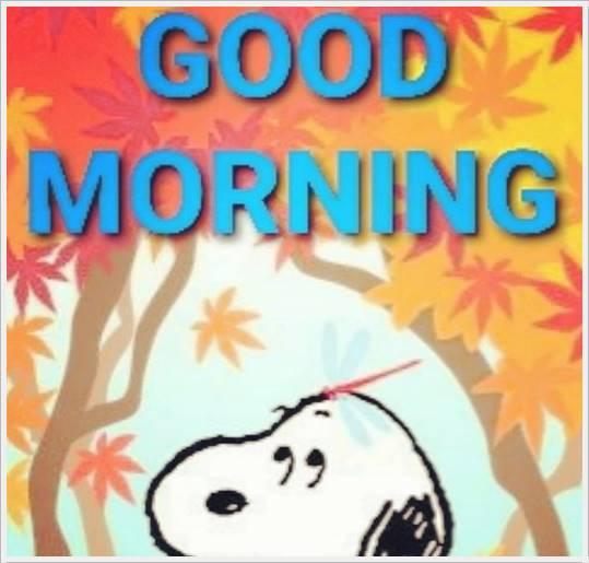 good morning photo hd56