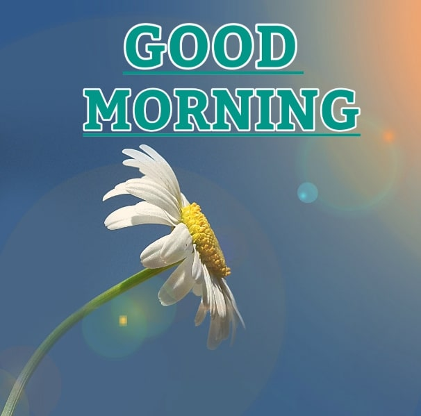 Best Good Morning Images HD Free Download 101