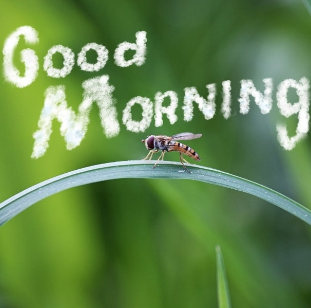 Best Good Morning Images HD Free Download 102