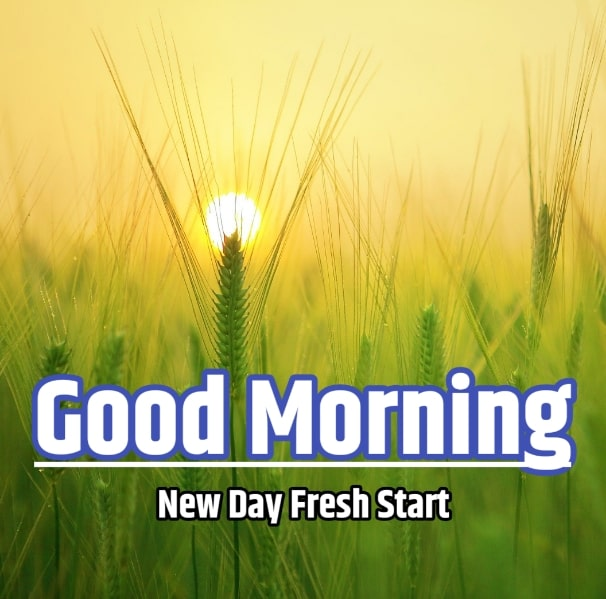 Best Good Morning Images HD Free Download 107
