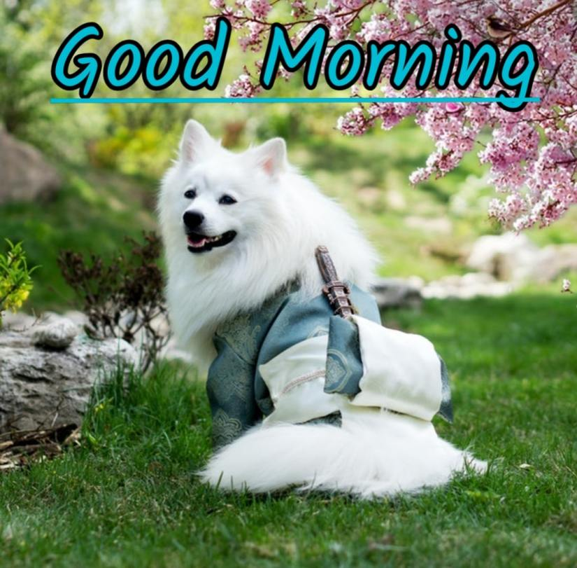 Best Good Morning Images hd6