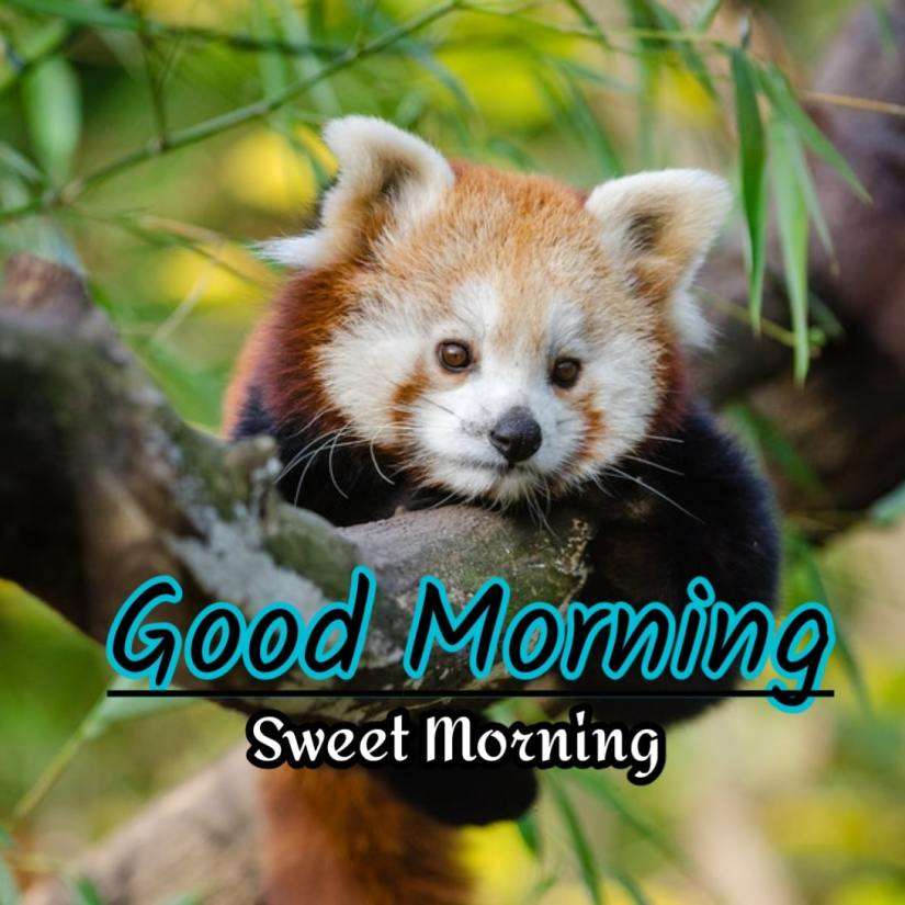 Best Good Morning Images HD Free Download 31