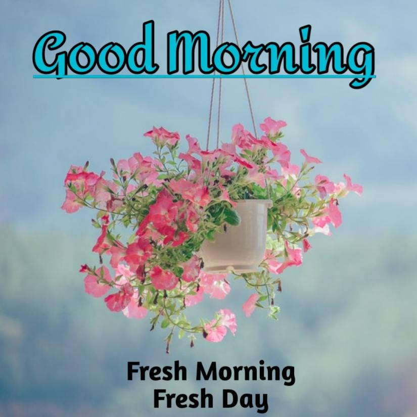 Best Good Morning Images HD Free Download 34