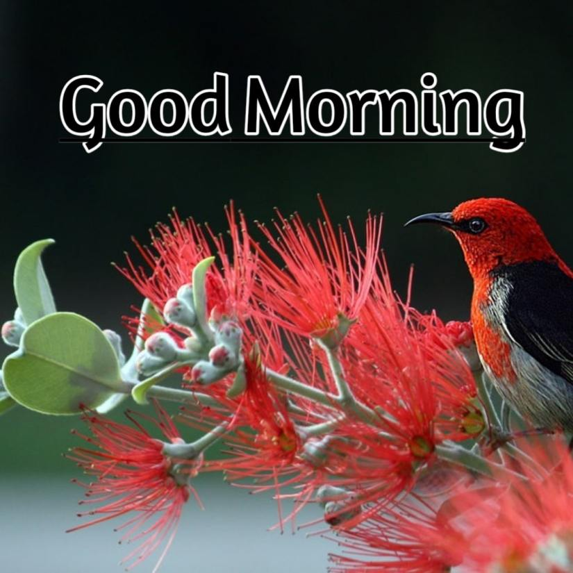 Best Good Morning Images HD Free Download 48