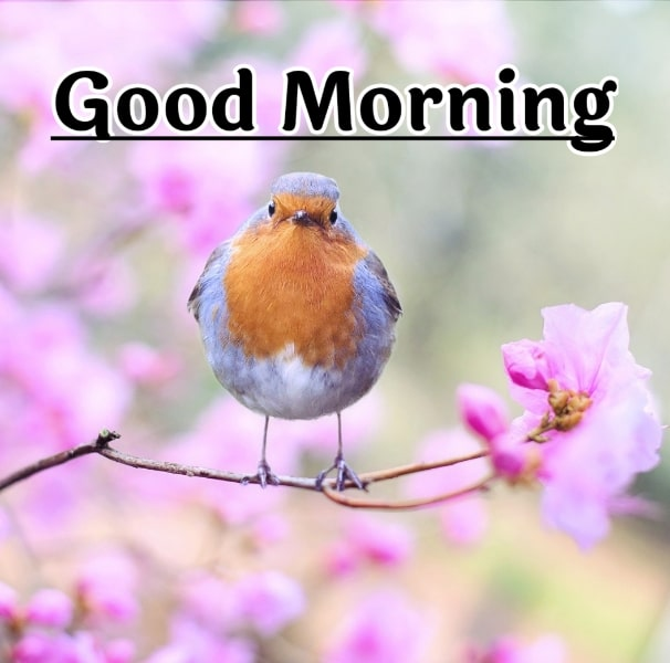 Best Good Morning Images HD Free Download 67