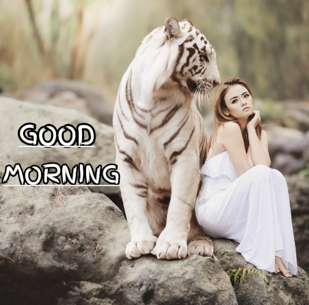 Best Good Morning Images HD Free Download 87
