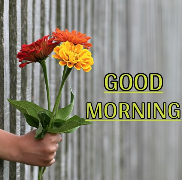 Best Good Morning Images HD Free Download 88