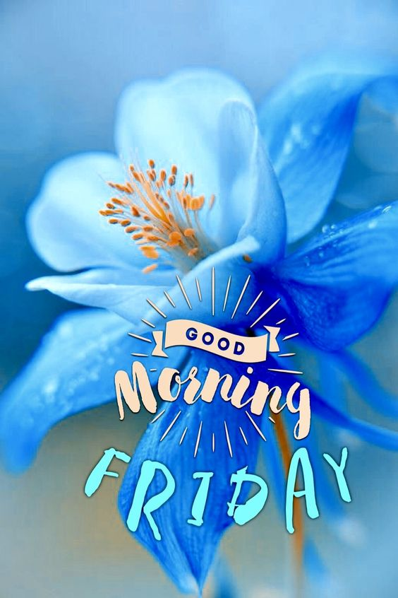 Weekend Wallpaper Hd 957 Friday Good Morning Images Cards Photos Amp Wishes