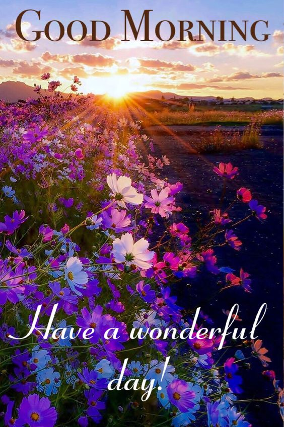 Very Cute Baby Mobile Wallpaper 818 Nature Good Morning Images Photos Flowers Pictures