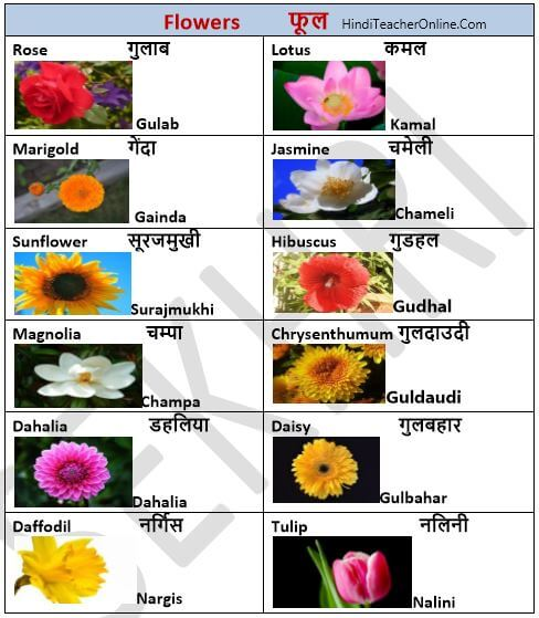 hindi-charts-for-kids-flowers