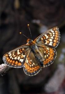 butterfly-1716544_640