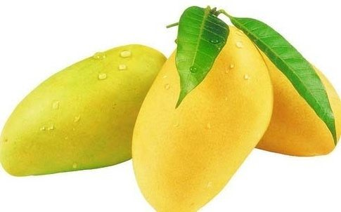 मेरा प्रिय फल पर निबंध my favourite fruit  essay on favourite fruit priy fal in hindi