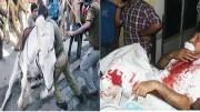 Injured Horse Dead Hindus