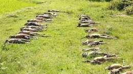 રોહિંગ્યા Mass Graves of Hindus Murdered by ARSA