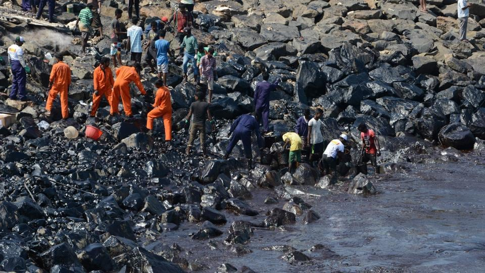 Chennai oil spill A shiny black ocean dead turtles and the cleanup  indianews  photos
