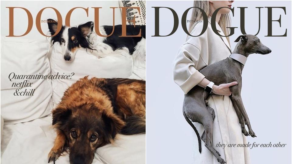 Move over Vogue, pooches are strutting their stuff for 'Dogue' fashion magazine covers – fashion and trends