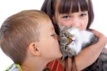 Lapsed kassigaFoto: Adelaide Animal Hospital