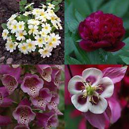 Pflanzen Für Den Standort Schatten Und Halbschatten Im Garten