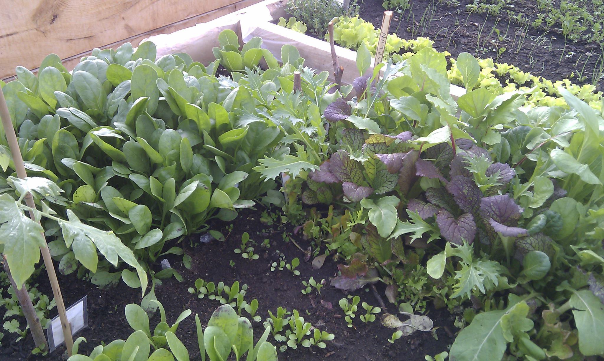 young garden plants