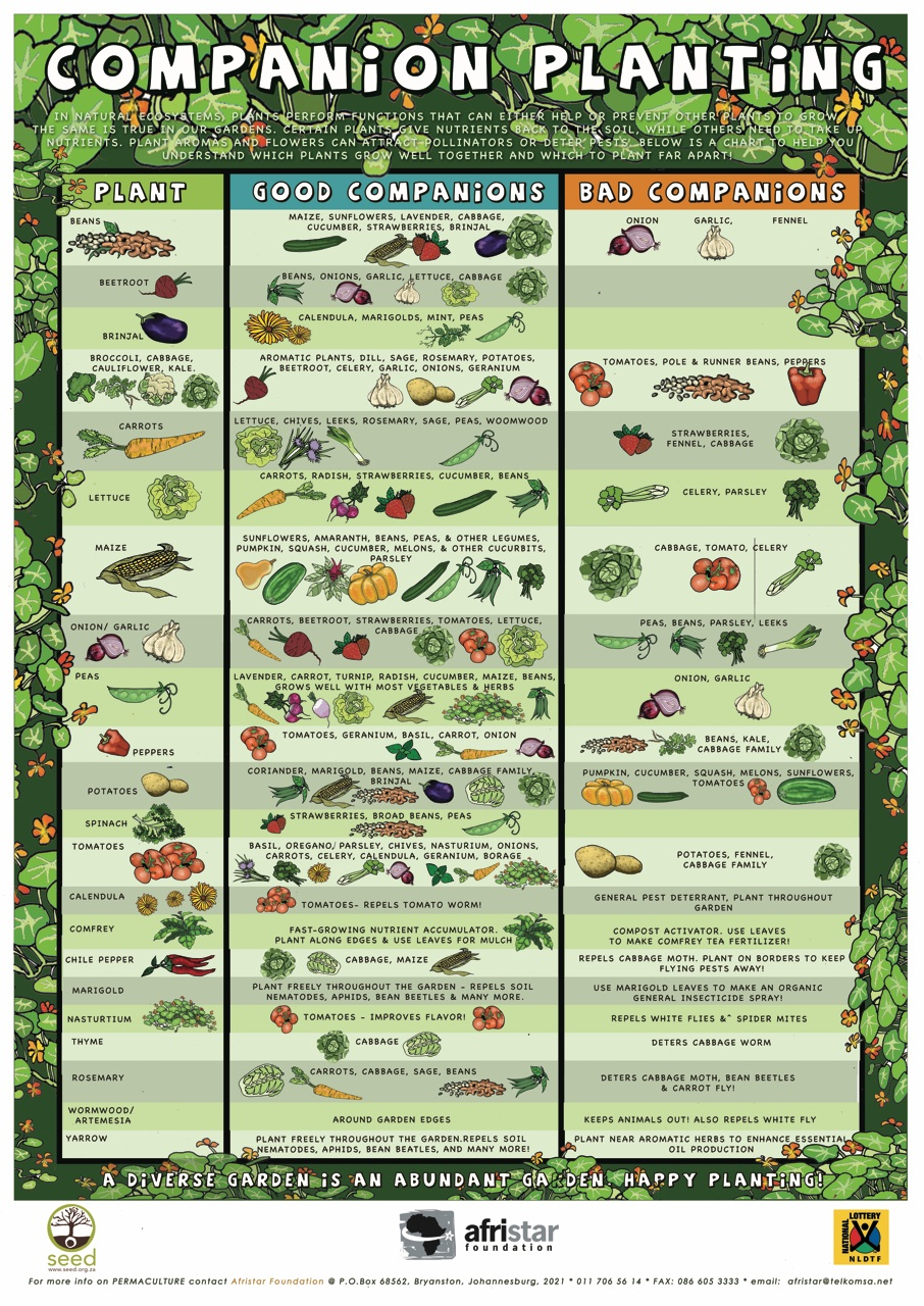 companion planting chart showing three columns with plants, good companions, and bad companions