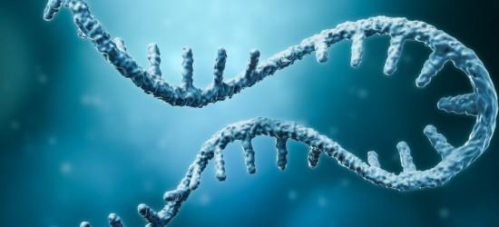 mRNA-Tracking mit fluoreszierendem Cytosin