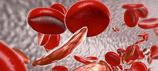 mRNA-Covid-impfstoffe von Moderna verändern rote Blutkörperchen