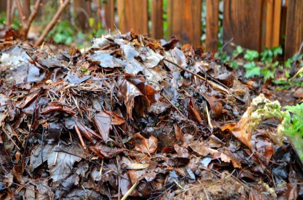 building soil quality with leaves
