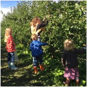 appels plukken 2015