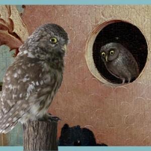 Jeroen Bosch uilen