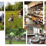 De leukste thee- en pluktuinen van Zuid-Holland