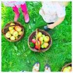 Waar kun je in het najaar appels plukken?