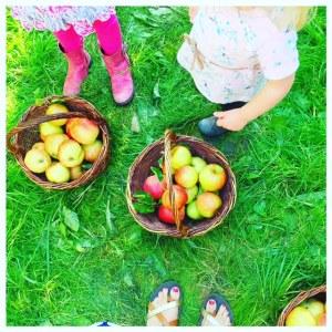 mandje met appels