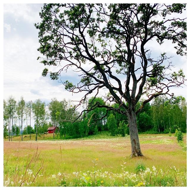 boom spoorfietsen in Zweden