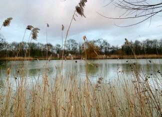 meer in het wilhelminapark rijswijk