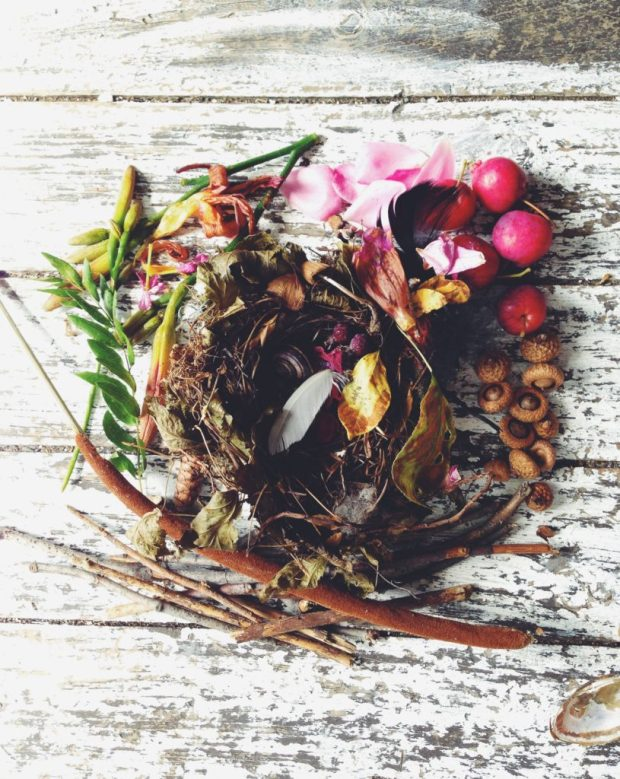 Collected natural treasures nest story of bird and snail